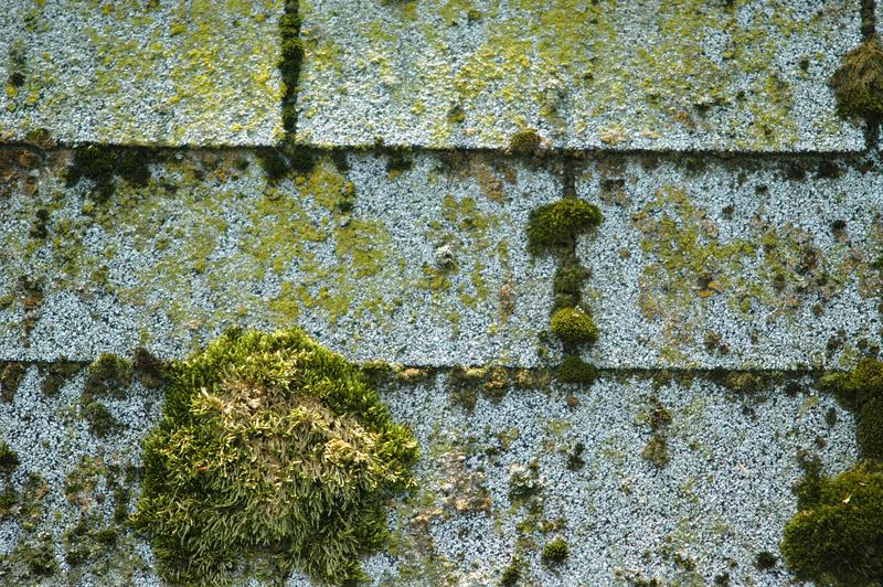 shingle roof moss